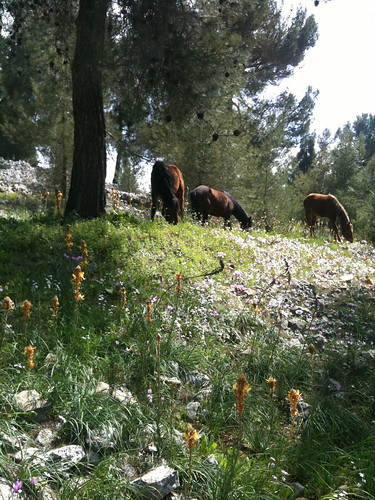 Horses & Wildflowers by Ayala Moriel