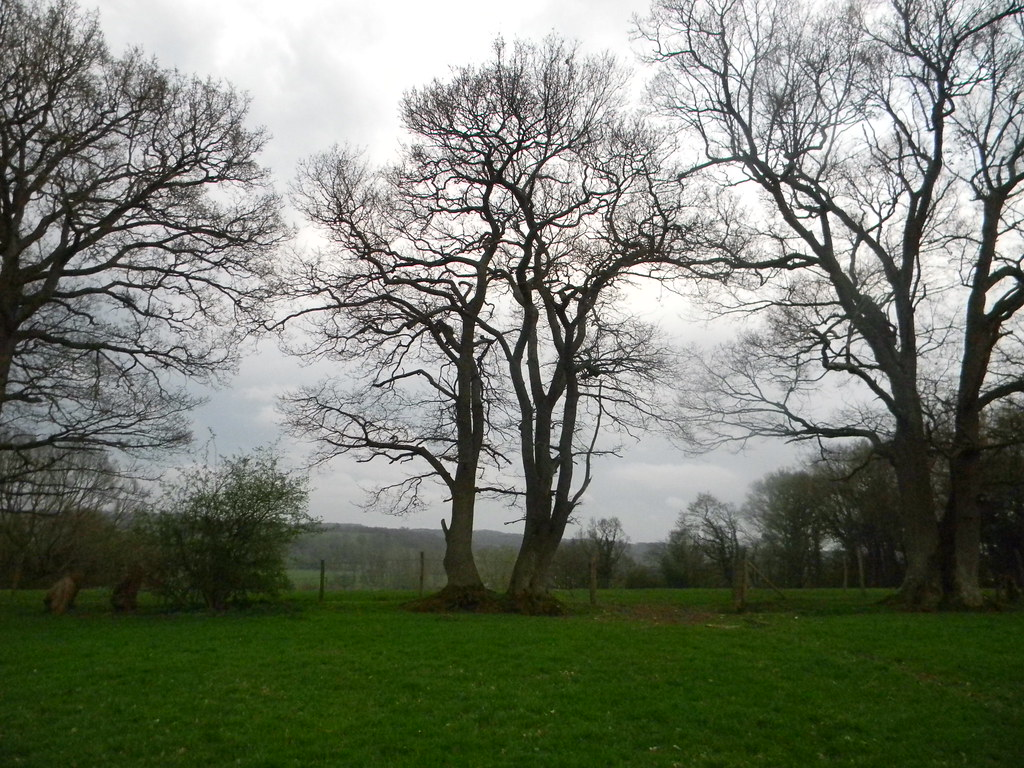 trees Robertsbridge circular (short)