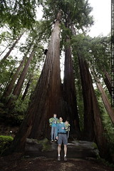nick, sean & sequoia in the heritage grove redwoods