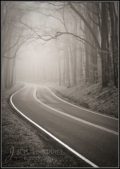 Foggy Smoky Mountain Parkway