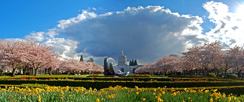 park city pink flowers trees sky flower tree weather architecture clouds oregon cherry photography colorful state blossom 5 capital blossoms capitol april 桜 sakura salem blooms pioneer viewing hanami willamette 花見 d40 goldenpioneer edmundgarman