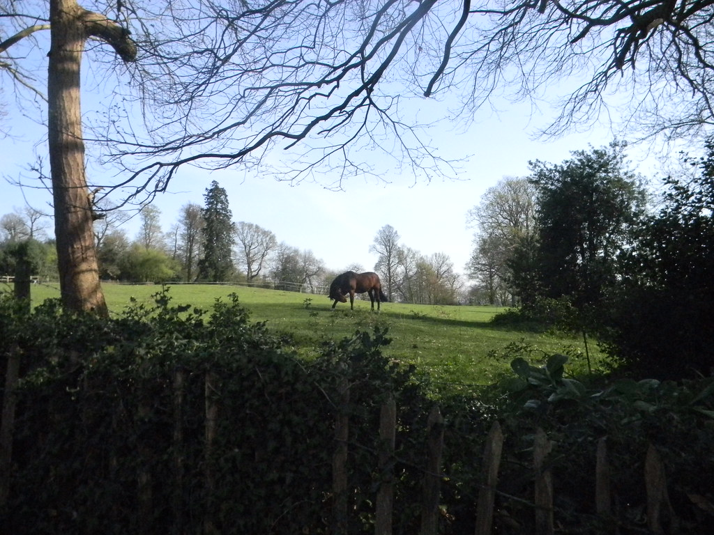 Horse in a field Oxted Circular