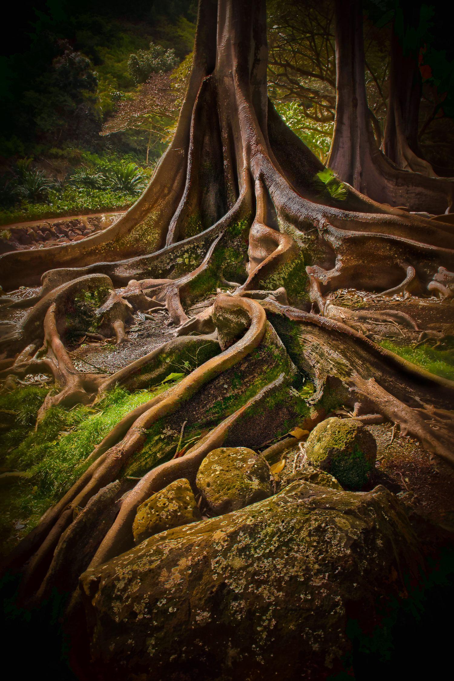 Morton Bay Fig Tree Allerton Gardens Kauai By Robert Ar Flickr Photo