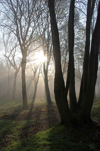 trees sun sunlight mist netherlands fog forest nevel bomen magic nederland dreams sunrays bos zon zonlicht magie dromen heiloo zonnestralen nijenburg mygearandme mygearandmepremium mygearandmebronze mygearandmesilver rondeo