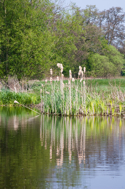 Rushes reflected