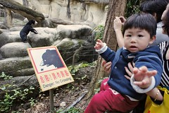 Black Bears Are Dangerous