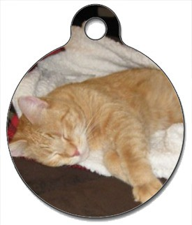 Thomas being lazy cat tag
