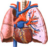 Treating acute pulmonary embolism with anticoagulant therapy (ACCP Guidelines)