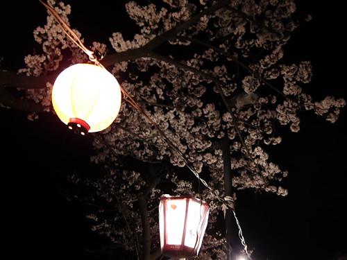 新発田城の夜桜