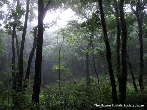 Field Recording at Totoro Forest - Sayama Hills, Saitama トトロの森