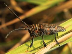 Bandundu Bug Safari