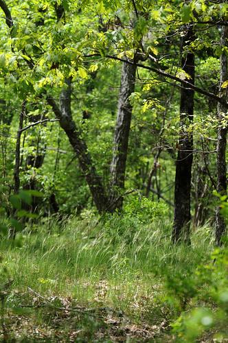 mountain green al oak huntsville grasses bluff subdivision