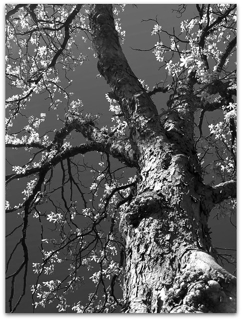 :: 51/365 :: BW photography 2/7