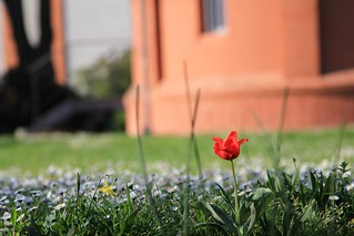 L'Observatoire の画像. park red france brick green grass garden spring tulip daisy toulouse printemps jardindelobservatoire