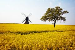 Windmill and Tree