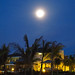 Small photo of Full Moon over the Melia