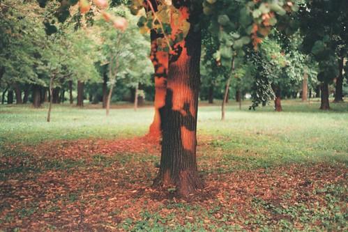park autumn sunset shadow film analog 35mm analogue goldenhour minoltax300
