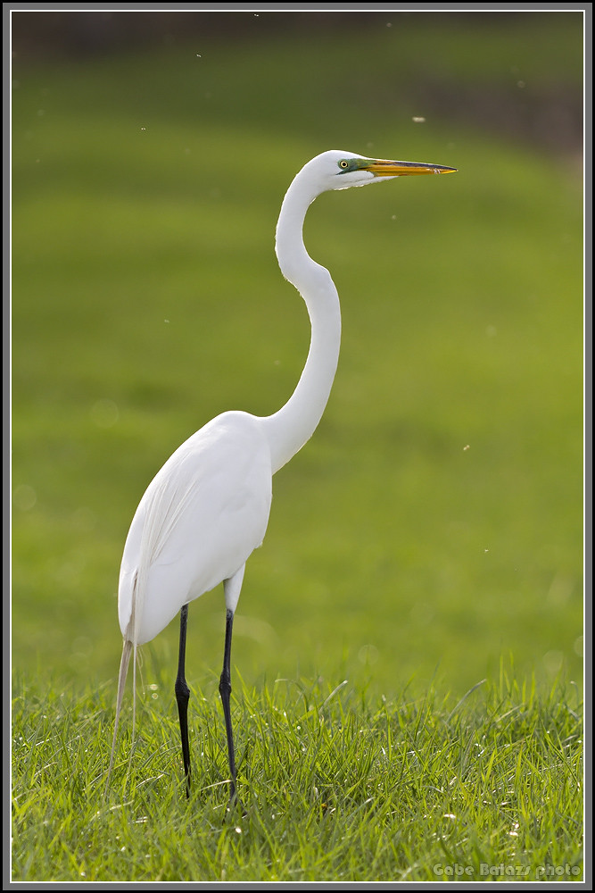 Lens options for Wildlife / Bird Photography for Canon 60D