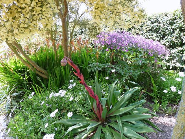Acacia g ranium de mad re et plante grasse en fleur - Plante grasse a fleur ...