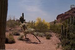 desert_botanical-24