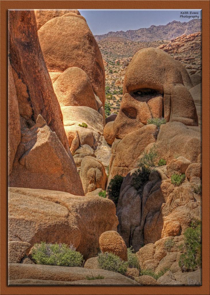 Joshua Tree National Park 008