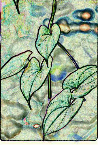 Hawaiian Culture Plants Flashcards | Quizlet