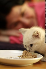 lunchtime for kittens