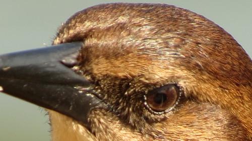 CC birds eye