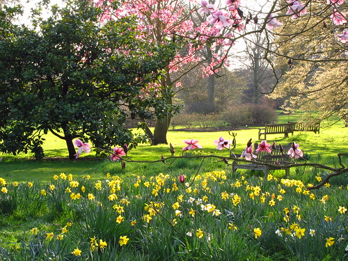 Magnolia Trees and Daffodils at Kew Gardens | by Laura Nolte