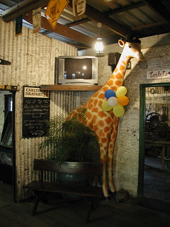 Giraffe with balloons!  in Lions Den Pub or saloon. FNQ