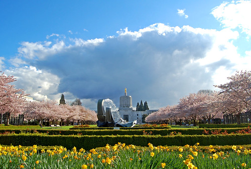 salem oregon capital capitol april clouds spring flowers flower viewing view hanami 花見 cherry tree 桜 sakura d40 edmundgarman blossoms storm stormy hail