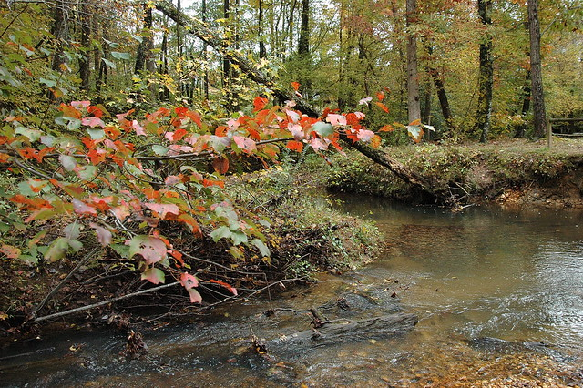 Autumn Foliage by Jenny's Creek