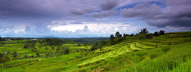 Panorama of rice terrace in jatiluwih jatiluwih for What does terrace farming mean