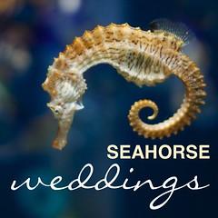 fish(0.0), seahorse(1.0), animal(1.0), organism(1.0),