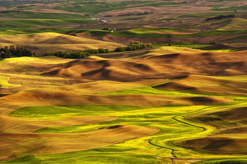 landscape countryside washington butte farm wheat country farmland hills land fields rolling colfax palouse steptoebutte thepalouse