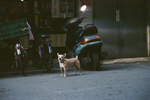被當作是車牌的犬 by Jarvis@medialand