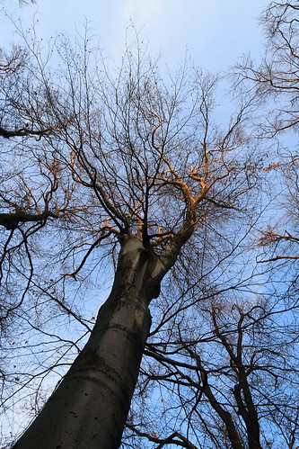 Skeleton Tree in Sunset