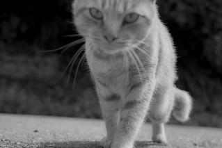 野良猫 - Stray Cat
