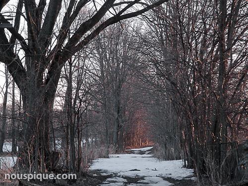 winter snow dawn pinehousefarm