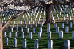 cemetery, tree,