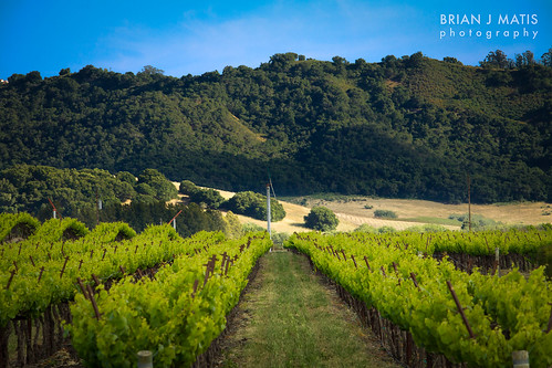 vineyard and hills off Orcutt [881]