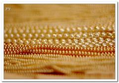 orange(0.0), gold(0.0), gold(0.0), pattern(1.0), brown(1.0), yellow(1.0), pearl(1.0), jewellery(1.0), gemstone(1.0),