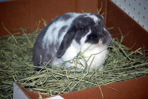 No treats so I guess I have to eat my hay.