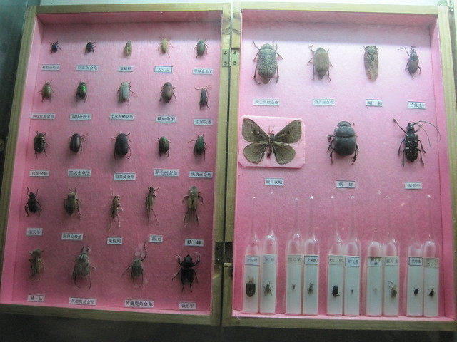 蝴蝶、昆虫类