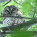 Small photo of Owls on Summit Street, Winston-Salem, NC