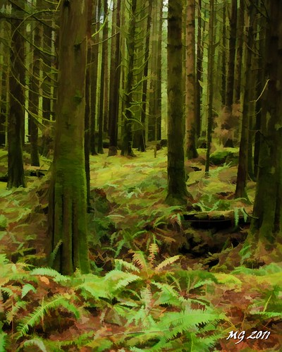 park trees canada tree green nature forest moss nikon rainforest trail simplified