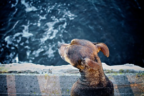 Love the water by twoguinepaigs pet photography