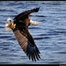 Mississippi Eagles-49