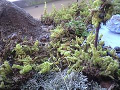 seaweed, soil, plant, non-vascular land plant,
