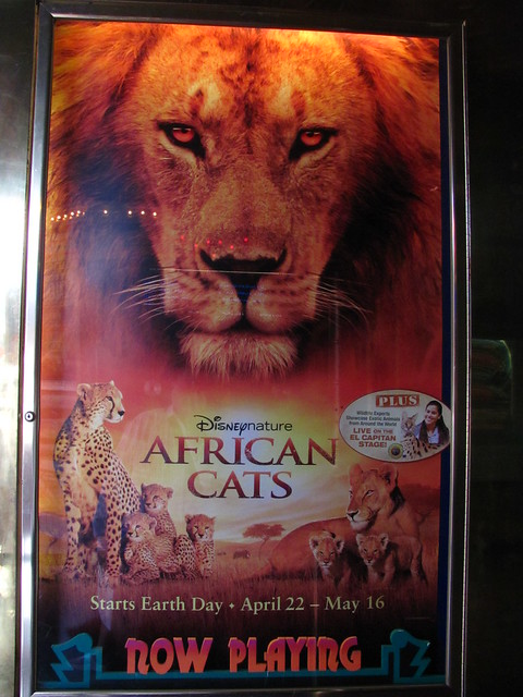 Header of African Cats
